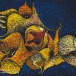 Starfish Cactus / スターフィッシュカクタス